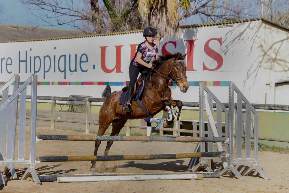 Concours Equestres